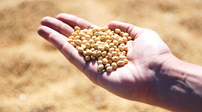 Poor Tanzanian farmers are facing heavy prison sentences if they continue their traditional seed exchange … courtesy of Monsanto